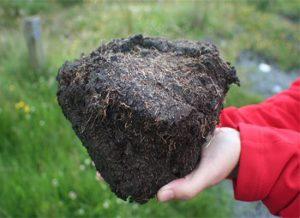 泥炭土(草炭土)和园艺 ,了解关于它的全部信息