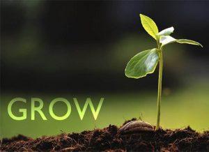 什么是土壤修复或者土壤修正,真正含义是什么?