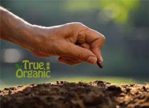 植物为什么需要肥料,如何选择?