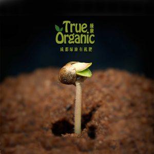 一粒种子在土壤中25天的生命旋律