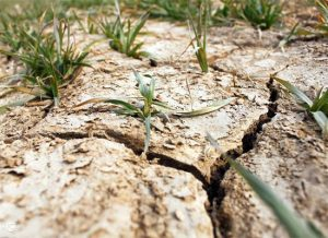 8种土壤病的原因和危害!
