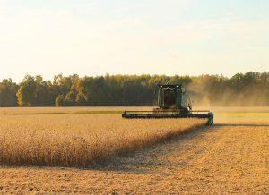 大豆正确的施肥方式是什么?