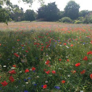 如何种植花草甸,有机的园艺就是答案