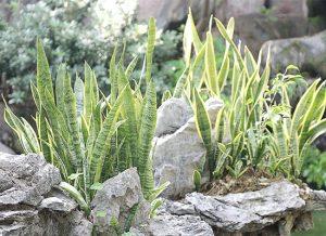 简单的家庭园艺乐趣,盘点三种又好养又能改善室内空气的植物!
