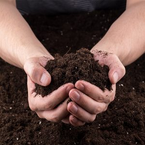 用这种土壤组合,降低虫害!