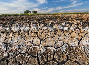 土壤科学,不能忽视的土壤盐害
