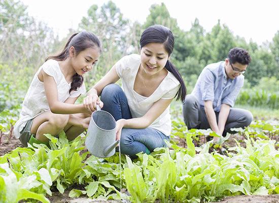 四川成都绿康有机肥有限公司_绿康有机肥有机农场的应用
