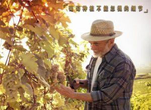 葡萄种植不能忽视的细节