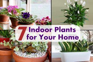 7种最好的室内植物