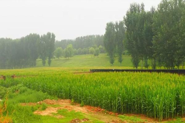 """农民土地的""""中国芯"""""""