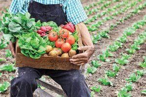 如何在农田或者大棚种植蔬菜