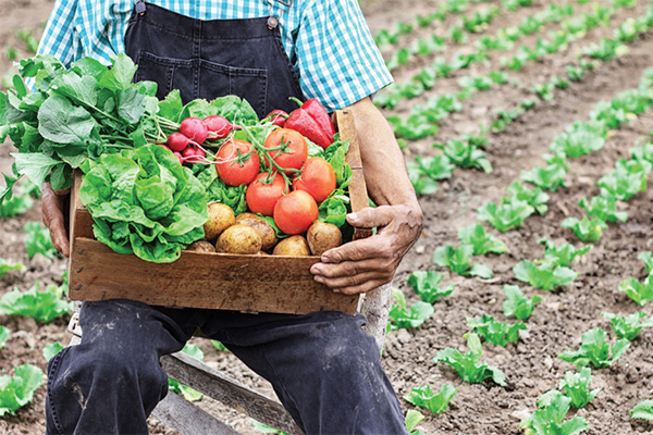 有机蔬菜_有机食品_有机蔬菜种植