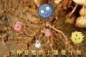 """前5名最""""酷""""的土壤微生物"""
