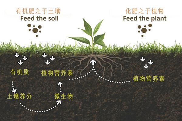 有机肥料和化学合成肥料(化肥)之间的区别
