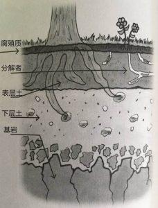表层土_底层土_基岩