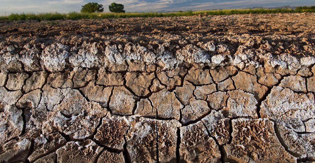 土壤科学_土壤病的成因和防治_土壤盐碱化