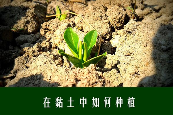 黏土改良_有机堆肥_黏土种植_粘土改良_土壤改良