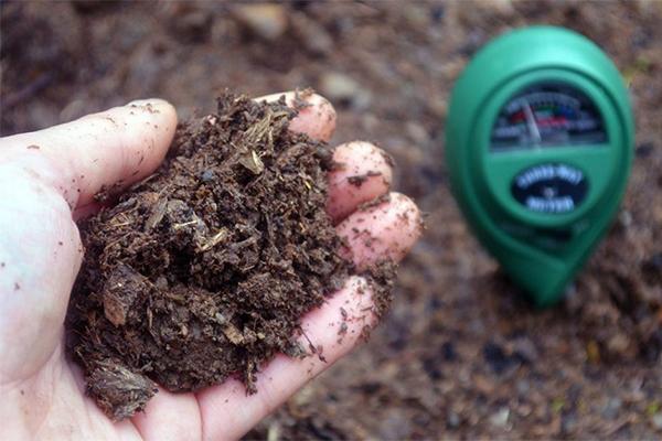 什么是酸性土壤,是什么原因导致的酸性土壤