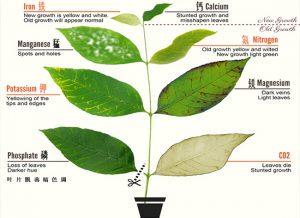 植物元素缺乏和过量叶面症状_营养指南