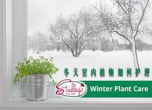 冬天室内植物如何护理