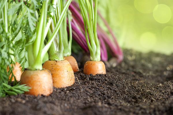 有机产品的良好开端始于土壤