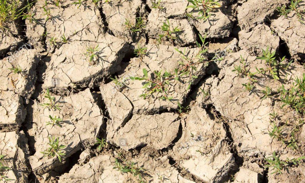 土壤科学_土壤病的成因和防治_土壤结构破坏_土壤板结