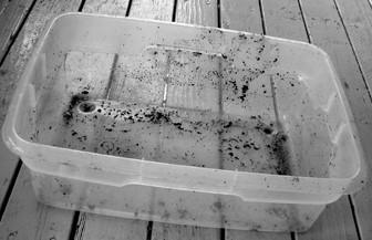 蚯蚓堆肥厨余指南
