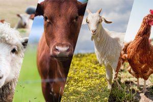 多层畜禽养殖设施及堆肥系统工程(二)