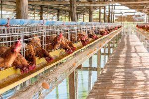 多层畜禽养殖设施及堆肥系统工程(一)