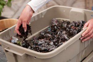 蚯蚓有机堆肥指南-其它注意事项(三)
