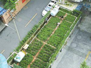 成都厨余垃圾循环利用,就地变为有机肥的重要原料