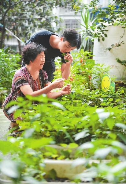 居民一起采摘成熟蔬菜