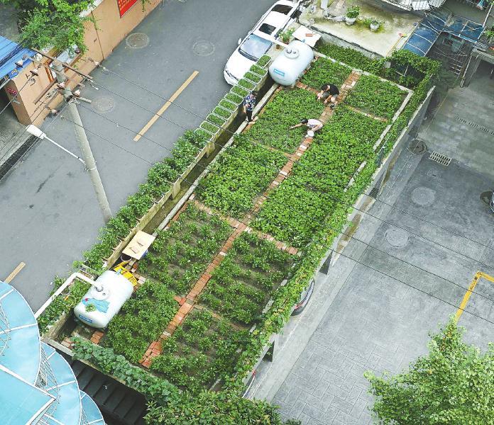 利用果蔬垃圾制作有机肥