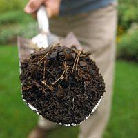 健康土壤的奥秘:有机质