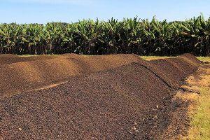 每亩用多少有机肥,土壤有机质才能增加1%,准确数据来了