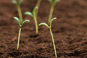 如何提升有机肥料的利用率?