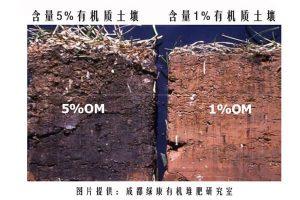 什么是土壤有机质?