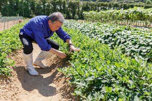 化肥,农药对土壤的危害究竟有多大?