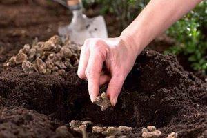 有机肥和氮肥、磷肥、钾肥有什么区别?