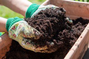 浅谈微生物有机肥的施用!