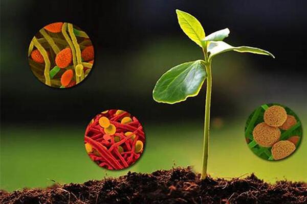 微生物菌肥_有机肥_生物有机肥